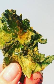 Cheesy No Cheese Kale Chips
